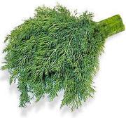 прадаю свежую зелень укроп и петрушку