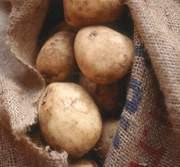 Куплю картошку