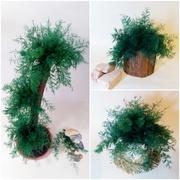 Нептунус - японські водорості