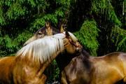 Приватні уроки верхової їзди. Кінні прогулянки,  фотосесії. Коні.